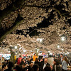 Under a ceiling of cherry blossoms, Japanese employees come to Maruyama Park in Kyoto during the cherry blossom season to laugh, tell stories, eat, and drink in celebration of the changing seasons.