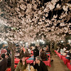 Couples young and old lose themselves in conversation over food and drinks during the cherry blossom festival at Maruyama Park in Kyoto.