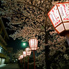 Just another random street in Kyoto during the cherry blossom season. Too many great examples to count.