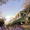 The Randen train, near Narutaki station.