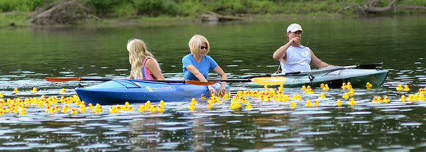 Volunteers fight to collect 2,000 rubber ducks as they float past the finish line on the Susquehanna River during the duck derby in Danville.