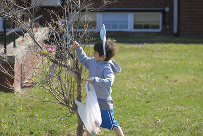 Dominik Derr picks an egg out of a tree on Saturday at the Grandview Health Homes Easter Egg hunt.