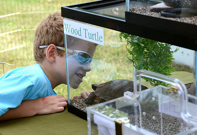 Josiah Swartzenteruber, 6, of Riverside goes nose to nose with a wood turtle at the Center Wildlife Care table during the Nature and Gargening Expo at the PPL Montour Preserve Saturday July 14, 2012.