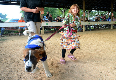 Genie, a 23-month-old Saint Bernard, takes Makala Kitchens, 6, of Milton around the arena Wednesday night during the Pet and Toy Parade Wednesday Aug 15, 2012 at the Montour-Delong Fair in Washingtonville.