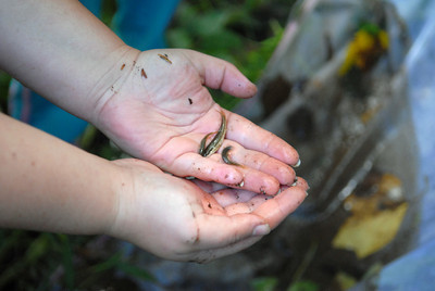 A couple small fish that St. Cyril kindergarten students caught in a creek while doing a nature lesson on Friday.