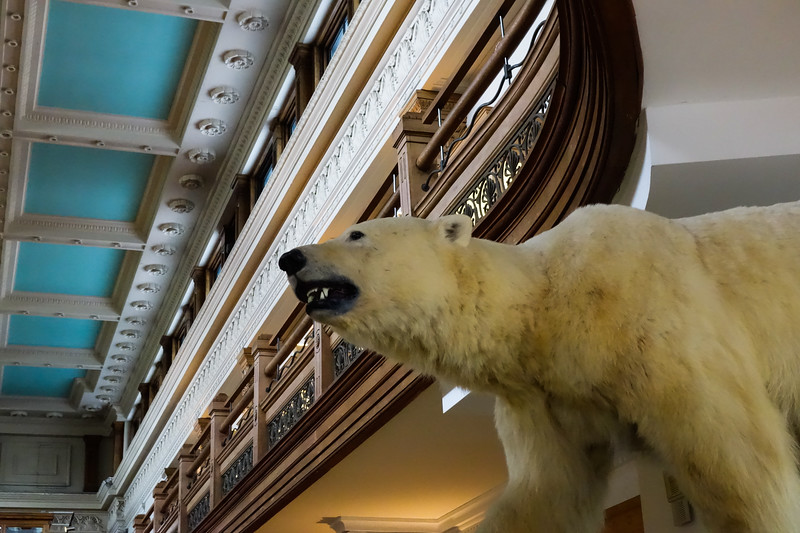 At the Redpath natural history museum (opened in 1882.