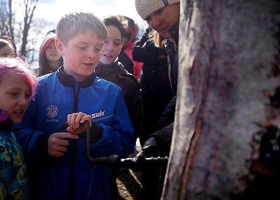 Monument Elementary school students tap a maple tree. 030317