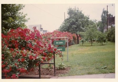 Colored Photograph of Mr. Elder's Garden IV (02052)