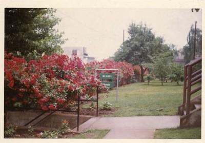 Colored Photograph of Mr. Elder's Garden V (02053)