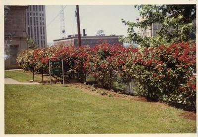 Colored Photograph of Mr. Elder's Garden XIII (02063)