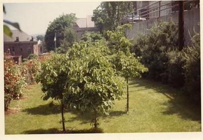 Colored Photograph of Mr. Elder's Garden XX (02071)