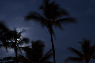 Full moon through the palm frondsNorth Shore of O'ahu, Hawai'i  March 24, 2005