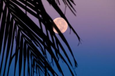 Full Moon behind Coconut Palm tree frond North Shore of O'ahu, Hawai'i
