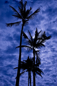 Full Moon behind Coconut Palm trees