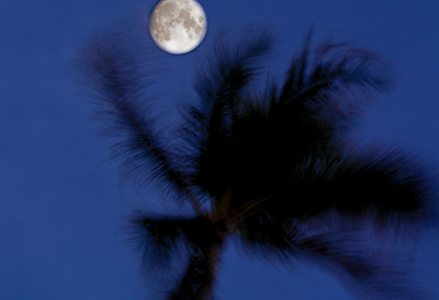 Full Moon behind Coconut Palm tree North Shore of O'ahu, Hawai'i
