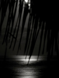 Moon through the palm fronds, over the oceanNorth Shore of O'ahu, Hawai'i  January 18, 2008
