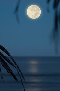 Moonset directly off Sunset PointNorth Shore of O'ahu, Hawai'i  November 11, 2006