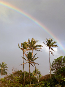 Rainbow over the palm trees on the beach  North Shore of O'ahu, Hawai'i