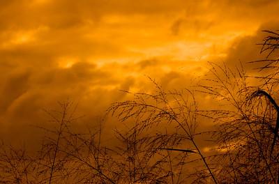 Grasses against a sunset sky   April,  North Shore of O'ahu, Hawai'i