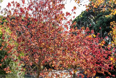 A Glimpse of Autumn