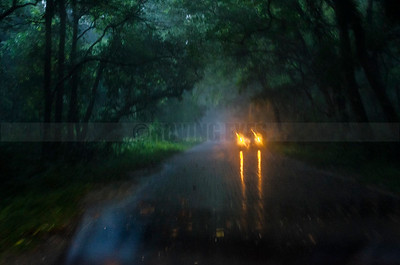 D23:The road cuts through the mysterious Chilapata forest in Dooars,West Bengal, rain adding to the charm.