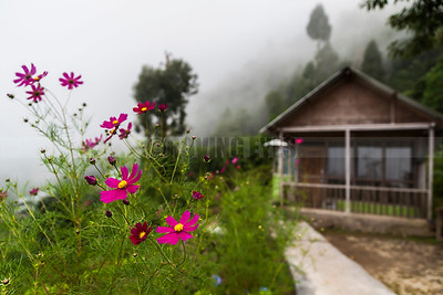 D13:A dream place to relax amidst nature,in Sillery Gaon,Kalimpong,West Bengal