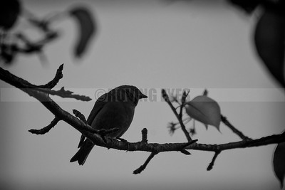 D41:Borong in South Sikkim is a birders' paradise