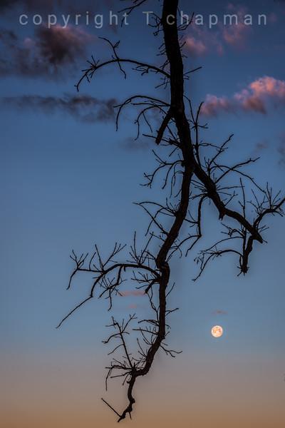 Betz Moon III