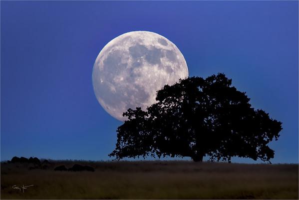Foothill Moonrise, Sierra Foothills, California