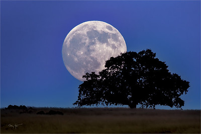 Foothill Moonrise, Sierra Foothills, California