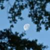 Moon 309RR 04-23-19