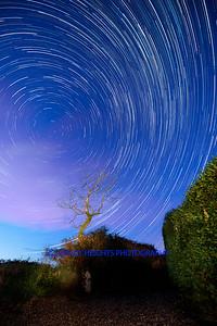 Night Tree Startrails-2