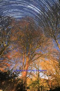 Kilmalooda trees final-crop-w