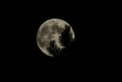 2012-09-29-moon-full-berkeley-hills-tilden-park-trees-1