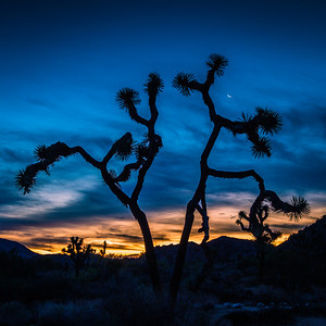 Joshua Tree — Crescent Moon Rise