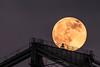 2014-07-11-moon-full-rising-bridge-san-francisco-oakland-bay-bridge-above-tower-bridge-tower-top-1-2