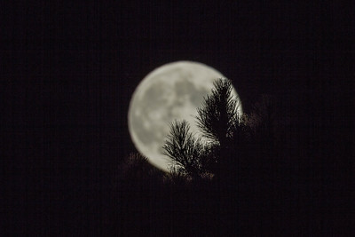 2012-09-29-moon-full-berkeley-hills-tilden-park-trees-2
