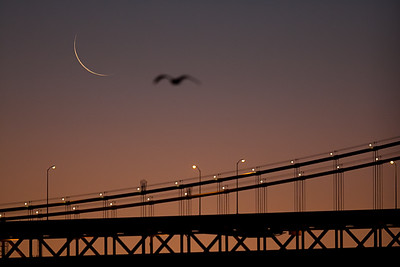 Cresent Moonrise over the San Francisco Bay Bridge