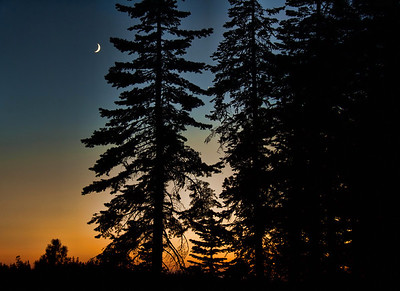 crescent-moon-trees-2