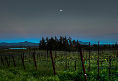 california-vineyard-grapes-moon-spring-7