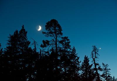 trees-moon-night