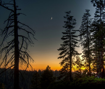 crescent-moon-trees-3