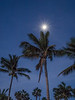 Setting Moon (not sun) and Palm Trees