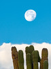 Near-Full Moon Setting over Clouds and Cacti