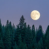 Full Moon Rising over Conifers