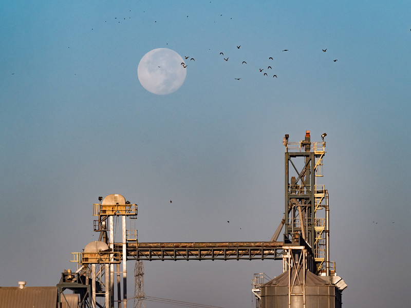 Setting Full Moon, Birds, and Storage Silo