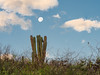 Setting Moon, Cacti, and Bird on Branch