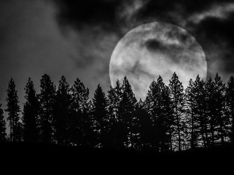 Moonrise in Pines