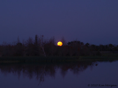 Full moon rise over Green Cay Wetland Preserve