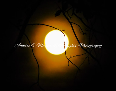 """Moon Glow"" Northeast Batimore MD"